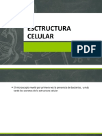 1 Esctructura Celular...
