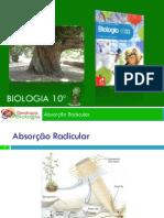 PPT2 - Absorção Radicular