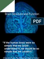2013 -  brain structure check