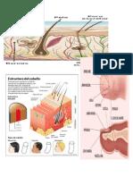 Esquemas Anatomia