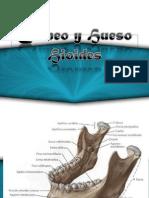 craneo y hueso hioides anatomia.pptx