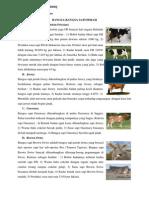 Copy of Bangsa Ternak Perah