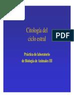 CicloEstralRataPerro