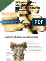Clase Artrologia Columna