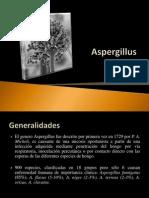 Aspergillus Final