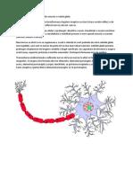 Tesutul nervos & neuronul (schema).docx