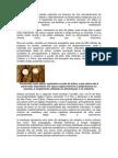 A mandioca é uma planta originária da América do Sul
