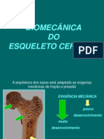 Biomecanica Do Esqueleto Cefalico
