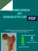Biomecanica Do Esqueleto Cefalico