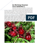 Klasifikasi Dan Morfologi Tanaman Rosella