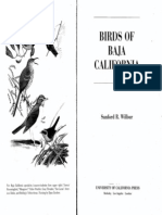 Bird of Baja California