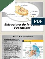 Estructura de la Célula Procariota