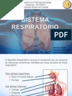 Sistema Respiratório - sem fundos