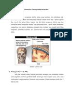 Anatomi dan Fisiologi Sistem Persarafan.docx
