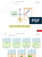TEMAS 5, 6 - Proteínas y acidos nucleicos.ppt