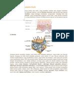 Struktur Dan Anatomi Kulit
