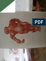 Muschi spate.pdf