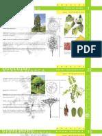 Herbarium (1)