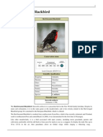 Red-breasted Blackbird.pdf