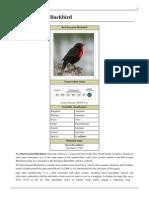 Red-breasted Blackbird.pdf