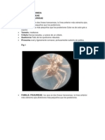 Hugo Spider