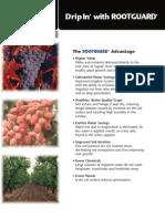 RTGRD_Brc.pdf