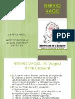 Nervio Vago
