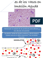 Reacciones de los Vasos en la Inflamación Aguda
