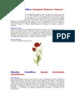 Plantas Medicinales de Arequipa