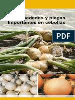 20130126104951 Bejo Enfermedades y Plagas Cebollas