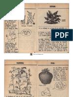 100+Plantas+que+se+Comen+3.pdf