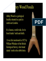 fossils of abbey wood.pdf