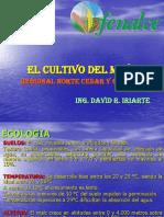 Copia de Manejo Agronomico Del Cultivo de Maiz