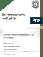 Stenotrophomona maltophilia