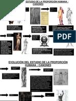 EVOLUCIÓN DEL ESTUDIO DE LA PROPORCIÓN HUMANA modificado