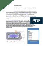 Estructura de la célula bacteriana