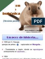 Jerbo_Lab_ Peste_bubónica