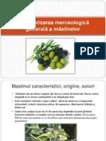 Caracterizarea merceologică generală a măslinelor.ppt