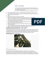 Cultivares y Variedades