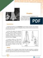 el copihue.pdf