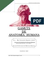 Texto Anatomia Gamuts