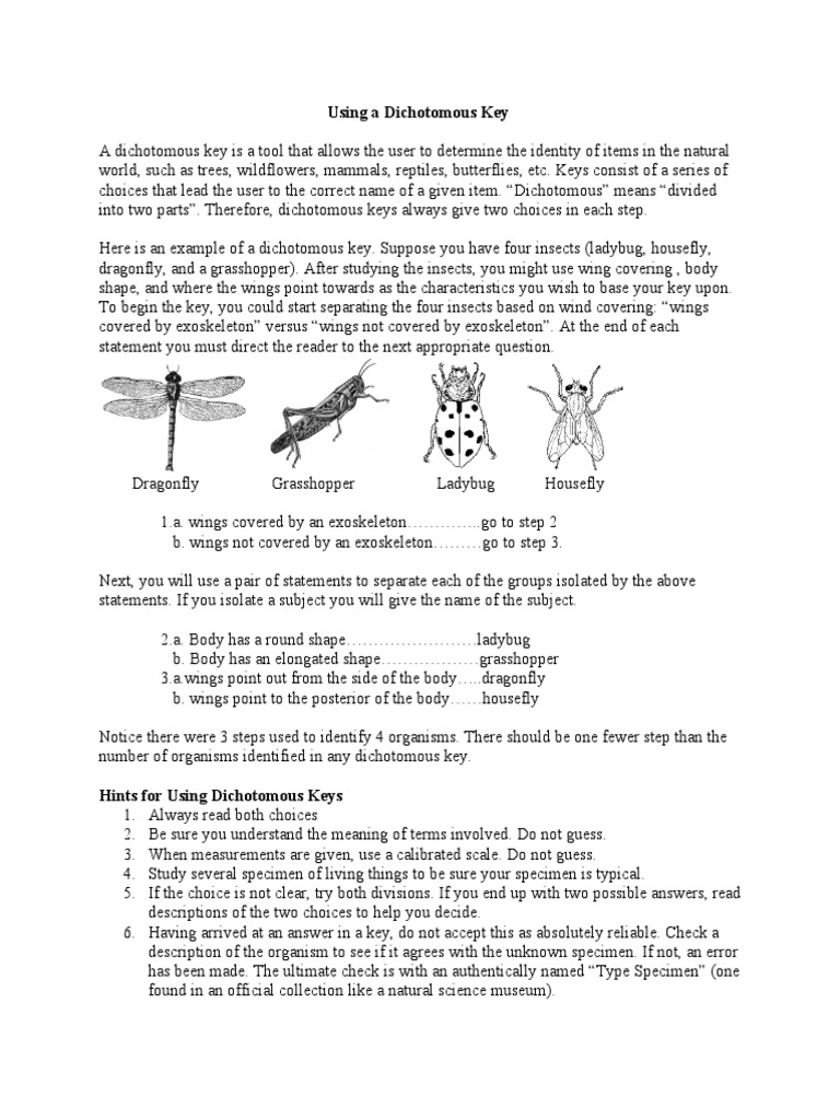 Insect Dichotomous Key Worksheet Sharebrowse – Dichotomous Key Worksheet