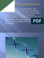 ADN(Ácido Desoxirribonucleico)