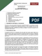 Guía Práctica N_4 - Evaluación de codo y antebrazo