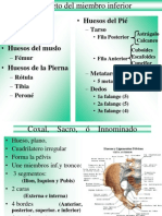 OSTEOLOGIA, Miembro Inferior[1]
