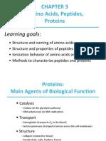 aminoacidos pepridos proteinas