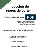 Flori Cultura 1