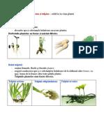 Rădăcina și tulpina.docx