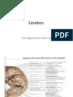 Cerebro - Configuración Externa