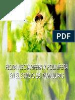Flora Tamaulipas